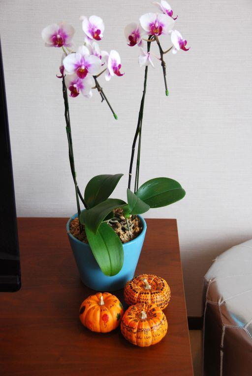 orchidpumpkins